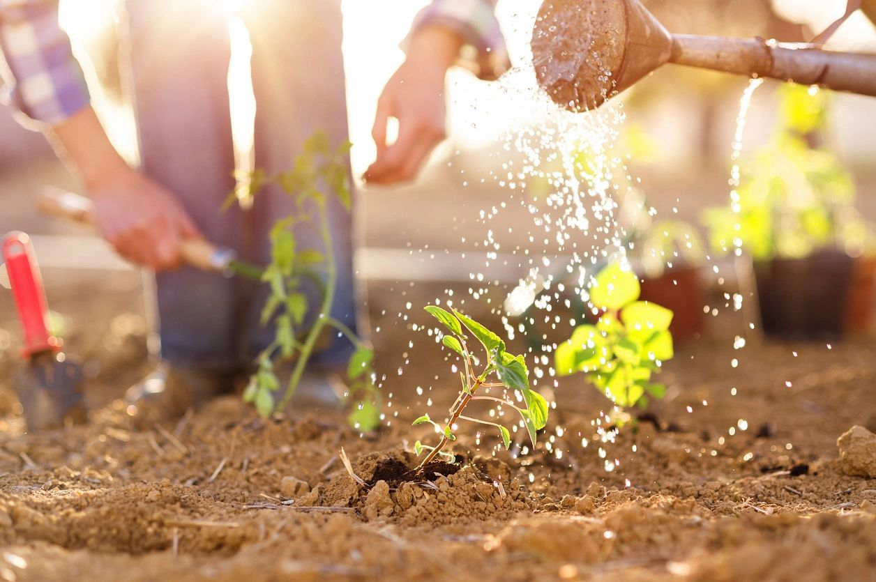 Gardening and Emotional Well-Being
